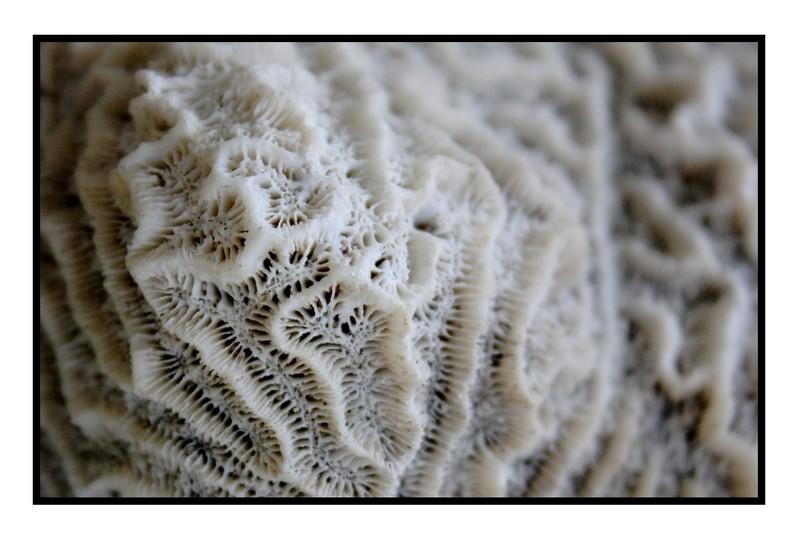 Un corail, des coraux Corail12