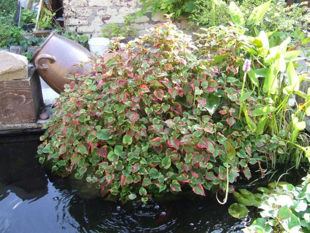 La flore aquatique 2006_012