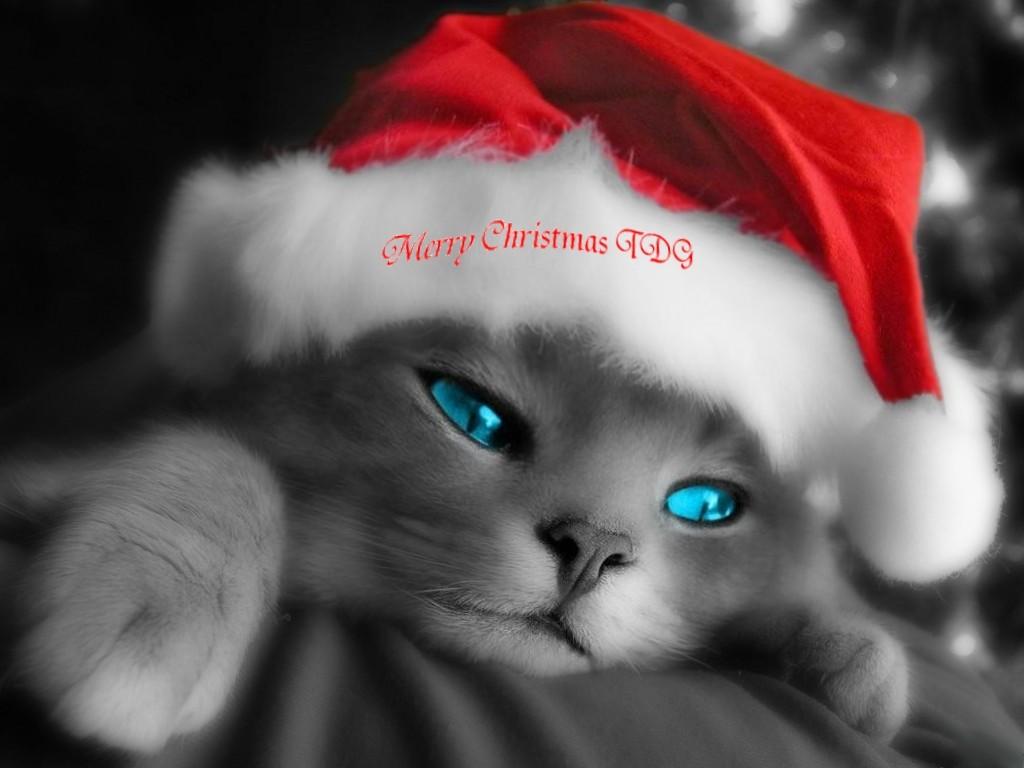 Happy Christmas everyone :) Xmas-c10