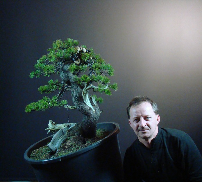 Pinus mugo - interesting Yamadori. Mn_710