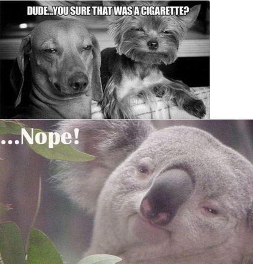 Funny stuff - Page 12 Tumblr10