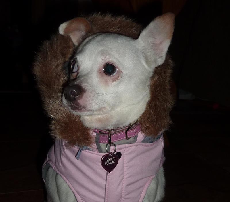 regarder ce que pense Doodie de son new manteau :O) 60410610
