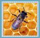 قسم النحل والمناحل