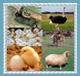 قسم الانتاج الحيواني والثروة السمكية