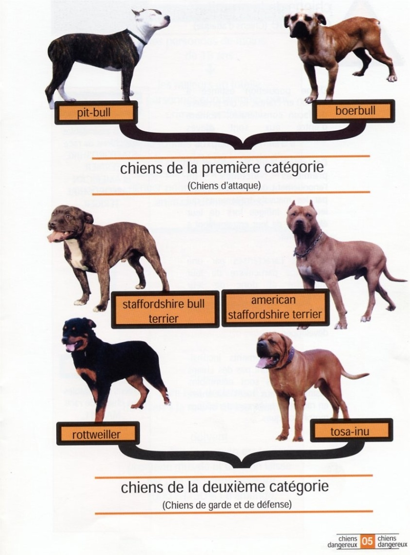 La règlementation applicable aux animaux dits dangereux. Chien10