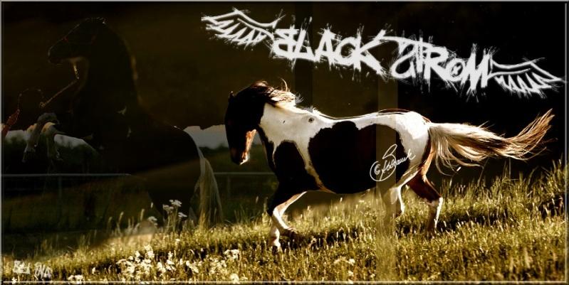 BOX De BLACK STROM 2009_b10