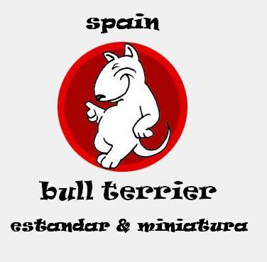 spainbullterrier