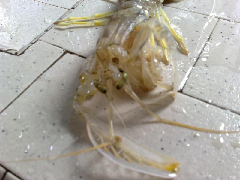 各位有看过这样的虾吗? 09092010