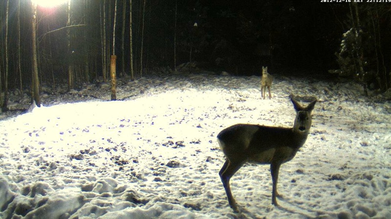 Boars cam, winter 2012 - 2013 - Page 4 2012-112