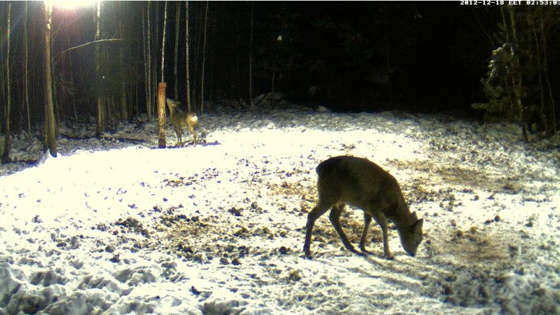 Boars cam, winter 2012 - 2013 - Page 4 2012-113