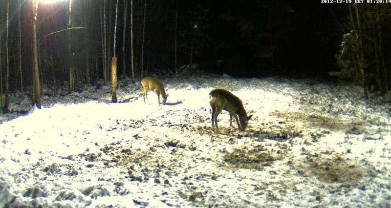 Boars cam, winter 2012 - 2013 - Page 5 2012-114