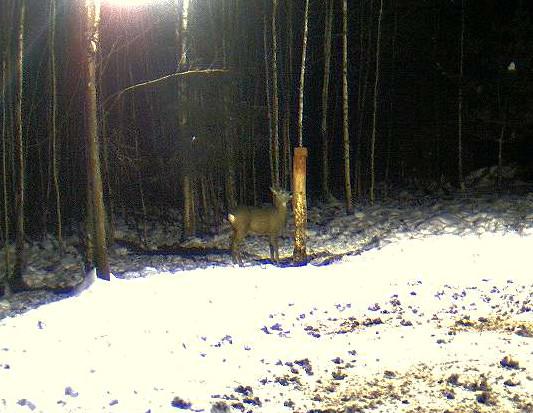 Boars cam, winter 2012 - 2013 - Page 5 2012-120