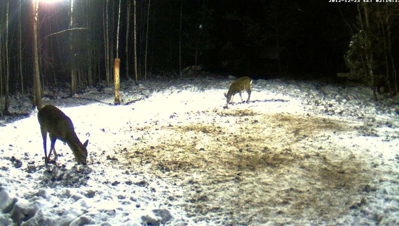 Boars cam, winter 2012 - 2013 - Page 5 2012-122