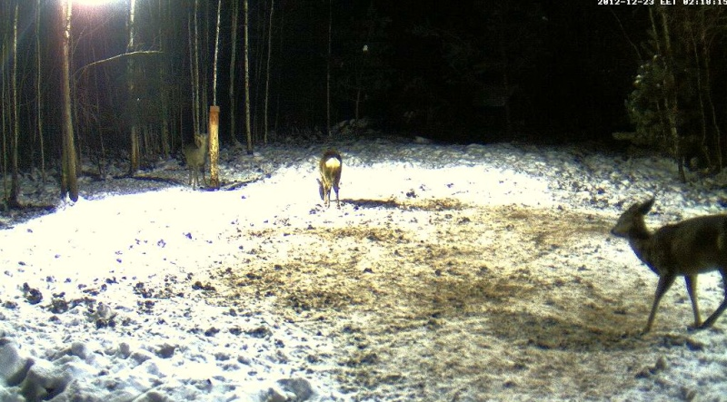 Boars cam, winter 2012 - 2013 - Page 5 2012-123