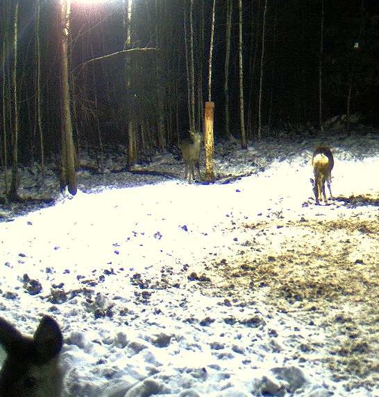 Boars cam, winter 2012 - 2013 - Page 5 2012-124