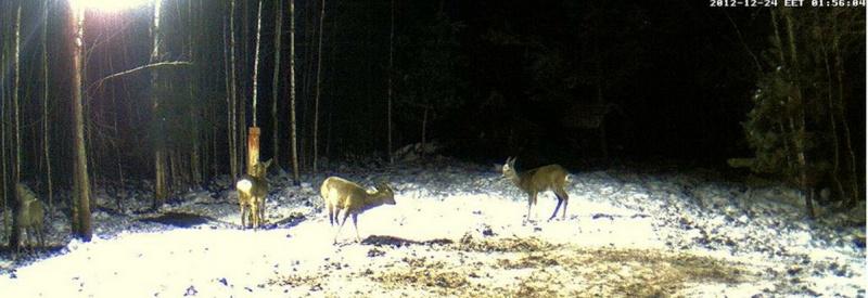 Boars cam, winter 2012 - 2013 - Page 5 2012-128