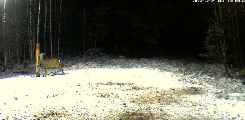 Boars cam, winter 2012 - 2013 - Page 6 2012-132