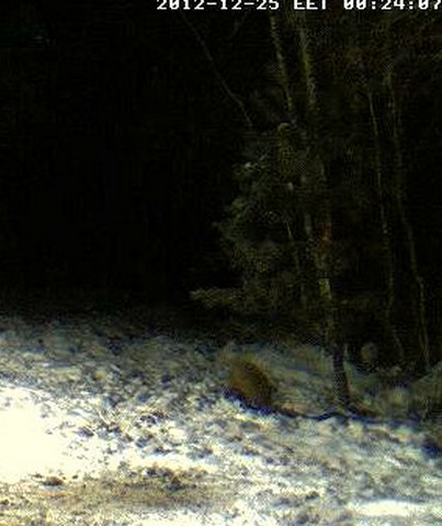 Boars cam, winter 2012 - 2013 - Page 6 2012-133