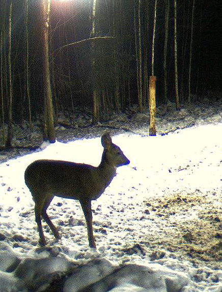 Boars cam, winter 2012 - 2013 - Page 6 2012-134