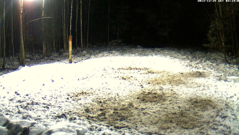 Boars cam, winter 2012 - 2013 - Page 6 2012-135