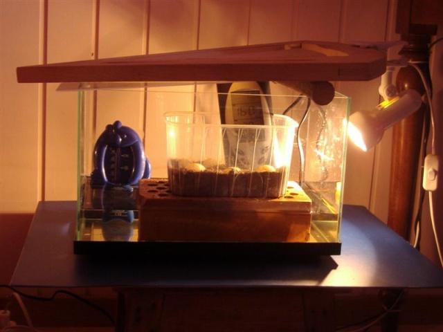 Les différents types d'incubateur Incuba10