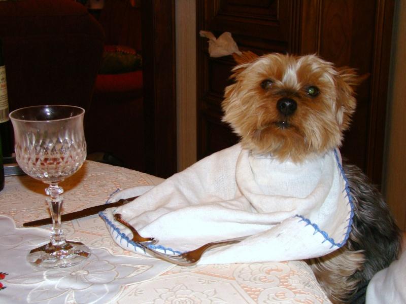 Concours du mois de Février 2010 : Thème : Animal de compagnie 01010