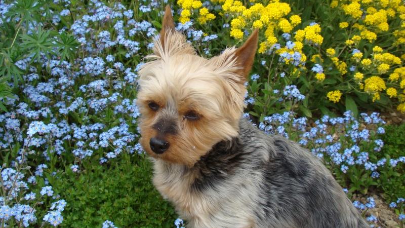 Fil sur les animaux domestiques (chiens, chats, oiseaux, etc.) Dsc02511