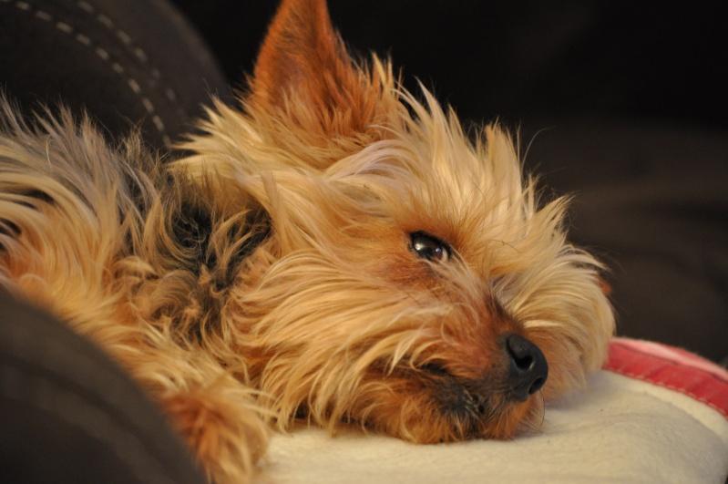 Fil sur les animaux domestiques (chiens, chats, oiseaux, etc.) Dsc_0010