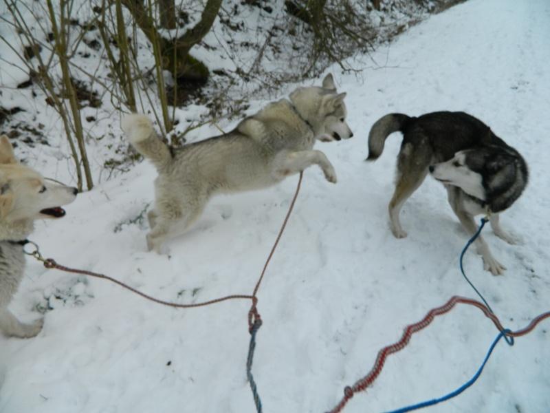 Balades dans la neige Dscn0311
