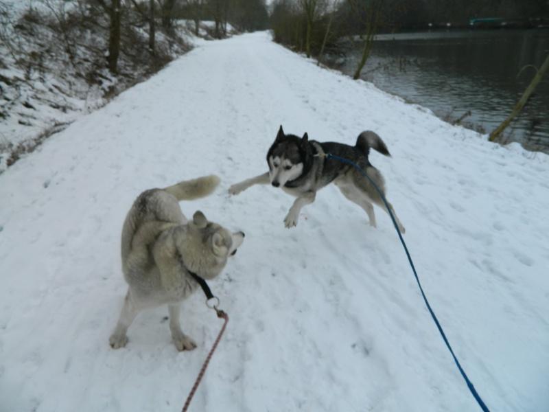 Balades dans la neige Dscn0312