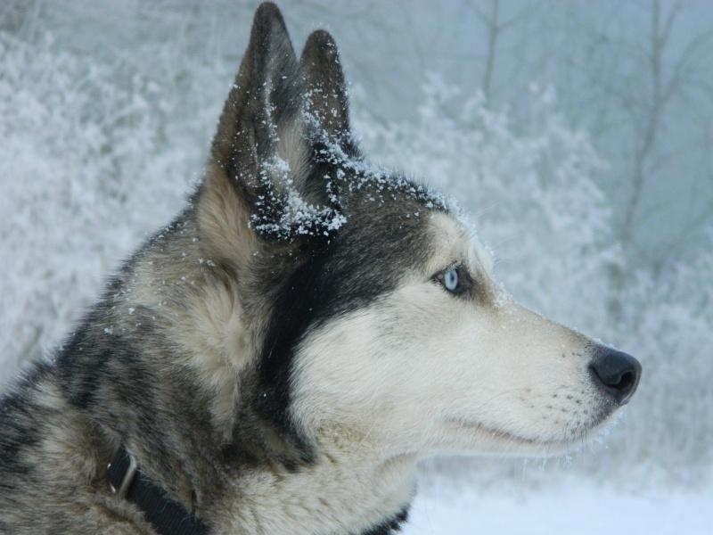 Balades dans la neige Dscn3710