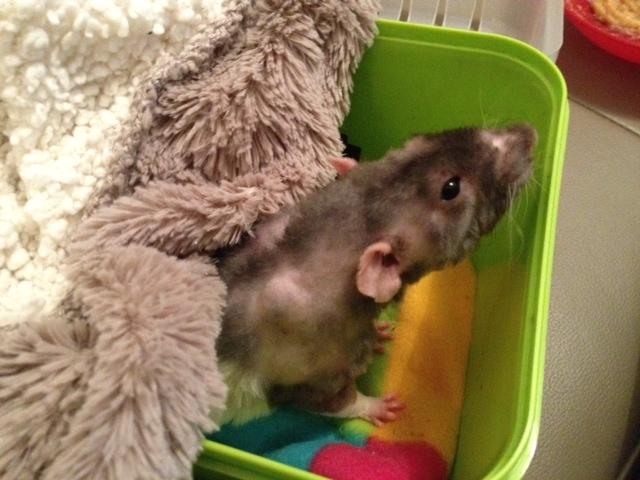 Sauvetage des 25 rats dans les Landes - Page 8 Photoa10