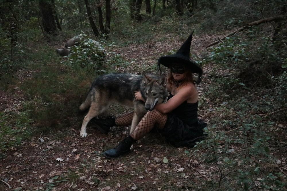 Ash le chien loup - Page 2 Img_9110