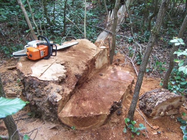 Un tout petit bout de bois 100_5521