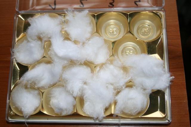 mini serre boite à bonbons-germer des graines dans le coton Img_7110