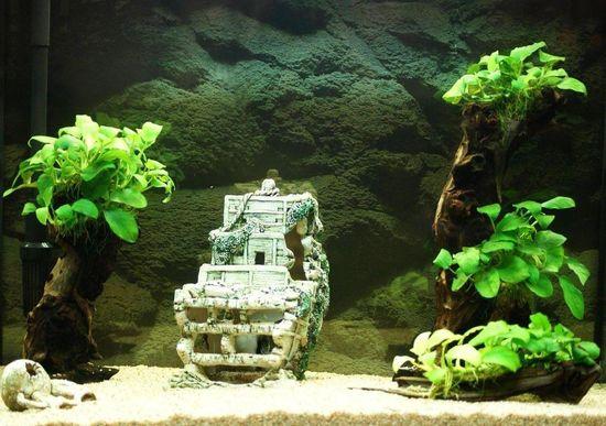 """Mon aquarium Juwel """" Lido 120 """" 210"""