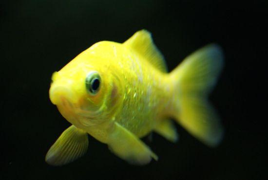 """Mon aquarium Juwel """" Lido 120 """" 310"""