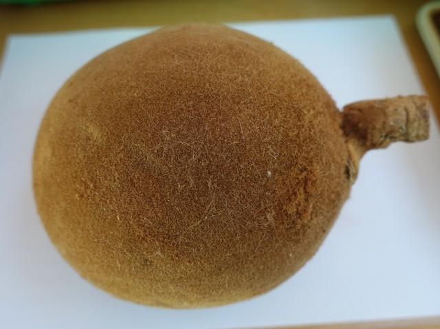 Fruit d'adansonia trouvé par Lu May Dsc05011