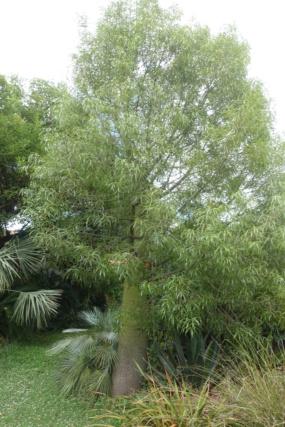 Pierre - Jardin d'acclimatation privé : l'Oasis (66) - Page 37 Dsc05216