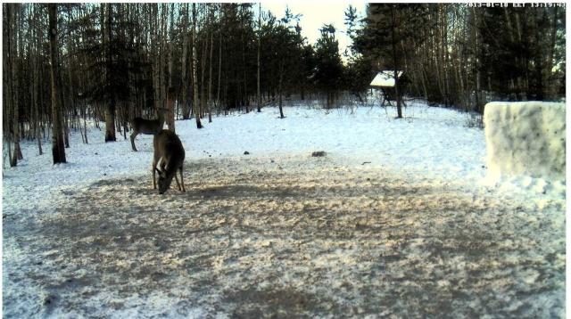 Web Cam en Direct d'une forêt ! ! ! - Page 2 Bambi10
