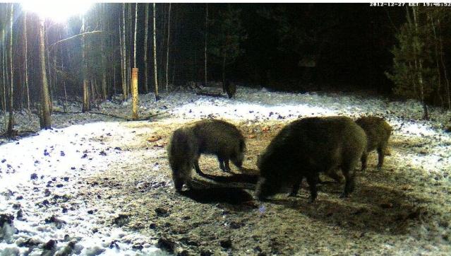 Web Cam en Direct d'une forêt ! ! ! Sans_g10