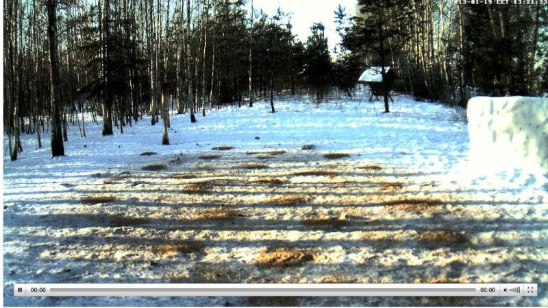 Web Cam en Direct d'une forêt ! ! ! - Page 3 Soleil10