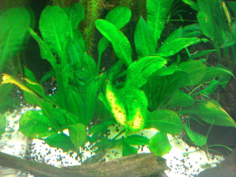 nouveau bac plante Wp_00019