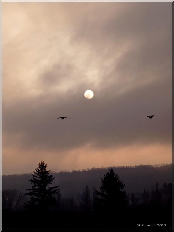 Hier matin , soleil blafard  Pc124010