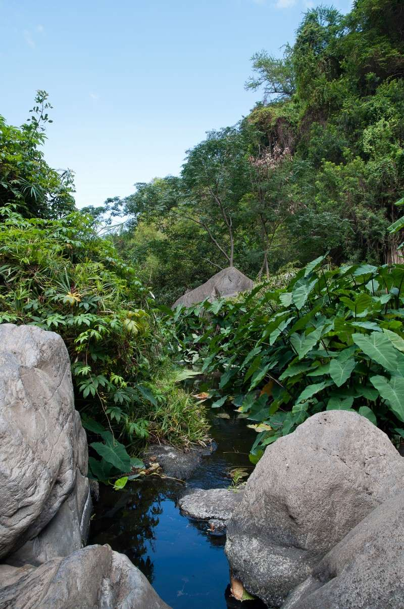 Les ruisseaux après les cascades (Réunion) Torren10
