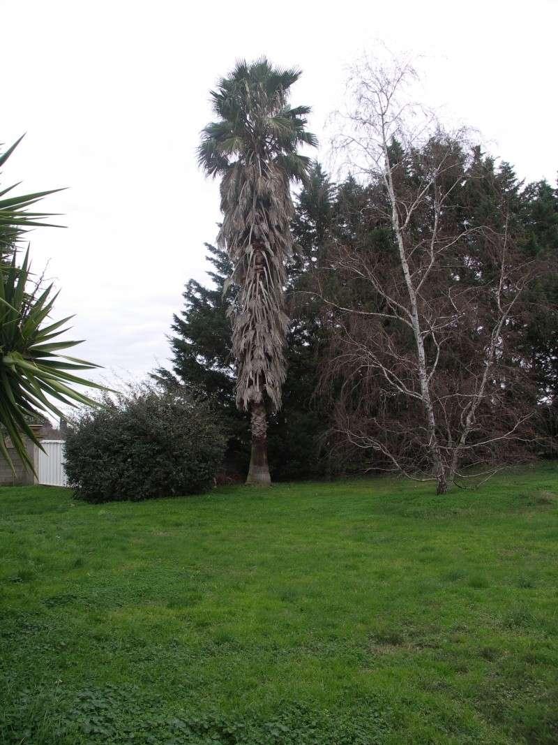 """La """"jupe"""" des palmiers ! - Page 2 Pict0020"""