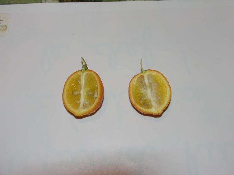 citronnier - Page 2 Pict0113