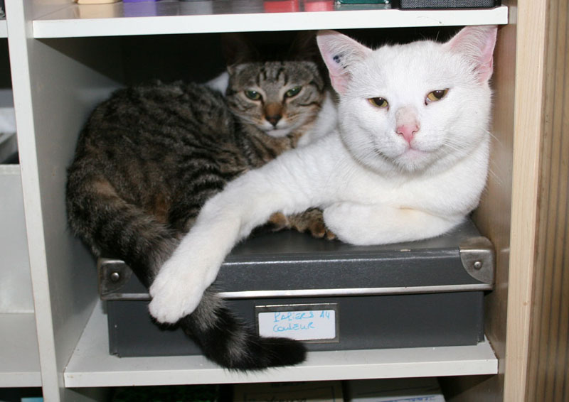 Comme chiens et chats.... Img_1011