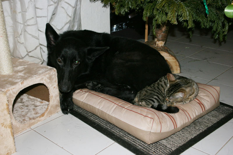 Comme chiens et chats.... Img_1610