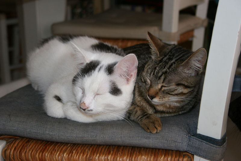 Comme chiens et chats.... Img_1611